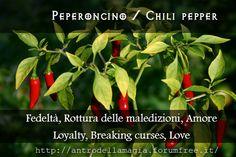 Peperoncino / Chili Pepper // Fedeltà, Rottura delle maledizioni, Amore // Loyality, Breaking curses, Love | L'antro della magia http://antrodellamagia.forumfree.it/?t=56575147