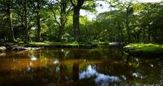 Campsites with Limited Facilities  Camping in the Forest (Cairngorms)