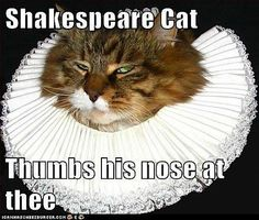 Shakespeare cat thumbs his nose at thee #funny