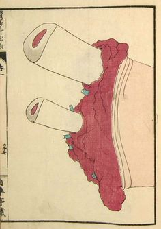 Anatomical illustrations from Edo-period Japan.  Zoku Yōka Hiroku (Sequel to Confidential Notes on the Treatment of Skin Growths), 1859