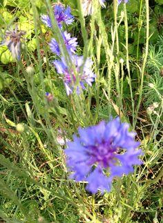 Mountaintop wild flowers