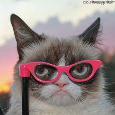 http://cdn.grumpycats.com/wp-content/uploads/2013/07/7.23.2013-1-625x625.jpg