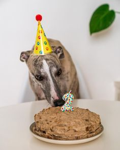 I Party, Party Hats, Dog Birthday, Birthday Cake, Whippet Puppies, Loki, Birthday Candles, Cute Dogs, Desserts