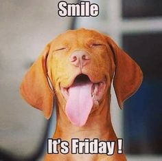 Friday cute animals friday humor, friday dog и funny dogs Friday Dog, Friday Meme, Its Friday Quotes, Happy Friday, Tgif Funny, Funny Love, Hilarious, Dog Quotes, Funny Quotes