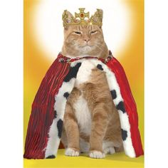 Queen Cat Birthday Card by Graphique de France. $2.95