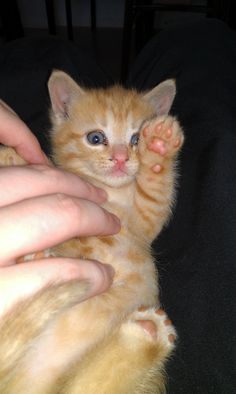 Tigger says hi! http://ift.tt/2jlDWCu