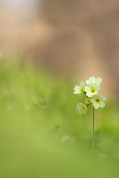 Ideas nature flowers plants bokeh for 2019 Little Flowers, Tiny Flowers, Amazing Flowers, Beautiful Flowers, Dame Nature, Flower Wallpaper, Belle Photo, Trees To Plant, Planting Flowers