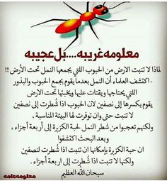 Islamic Art, Islamic Quotes, Duaa Islam, Did You Know, Poems, Religion, Knowledge, Arabic Calligraphy, Wisdom