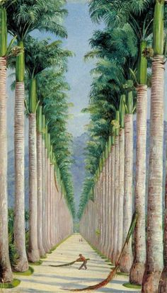 Avenue of Royal Palms at Botafogo, Brazil by Marianne North - c.1873 Oil on board, 48 x 27 cm / Collection: Royal Botanic Gardens, Kew