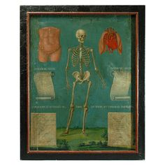 Rare 19th Century Mexican Anatomical Painting of a Skeleton | From a unique collection of antique and modern paintings at http://www.1stdibs.com/furniture/wall-decorations/paintings/