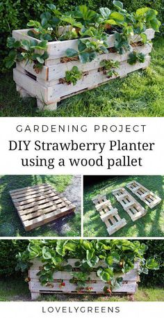 How to build a Strawberry Planter using just a single wood pallet. It takes an afternoon to build and allows you to grow strawberries raised off the ground and on patios How to Make a Better Strawberry Planter using Pallet Wood Strawberry Planters, Strawberry Garden, Pallets Garden, Wood Pallets, Pallet Gardening, Pallet Garden Box, Wood Pallet Planters, Allotment Gardening, Kitchen Gardening