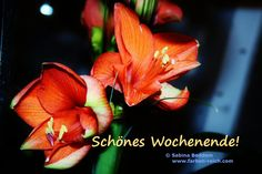Schönes Wochenende! http://www.farben-reich.com/