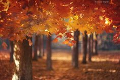 35PHOTO - Magda Bognar - Red Canopy