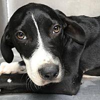 Pet Card Labrador Retriever Pet Adoption Dogs And Puppies