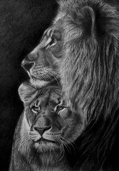 Lev s lvicí na A3, tužkami... kresleno dle fotografie z internetu