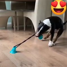 How to keep your dog busy for hours 😂🐶