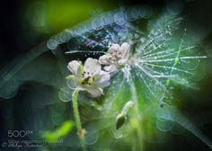 Melody of tiny love by ShihyaKowatari #nature #photooftheday #amazing #picoftheday