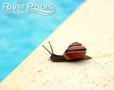 Which inground pool takes the longest to build and which inground pool can be installed the fastest? Check out our inground pool construction guide to find out! Inground Pool Designs, Pool Installation, Concrete Pool, Pool Construction, Fiberglass Pools, See Images, How To Find Out, Swimming Pools, Backyard