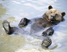 El oso se pega un baño - Los animales del mes: octubre 2012 - Fotos de Chile y el mundo en MSN Noticias