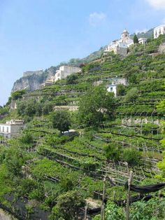 Amalfi vegetable garden - I could pin this here AND Garden Ideas. Love, love, love the Amalfi coast. Terrace Garden, Garden Spaces, Garden Beds, Herb Garden, Raised Vegetable Gardens, Vegetable Garden Design, Vegetable Bed, Vegetables Garden, Veggie Gardens