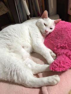 お休み〜〜  #cat
