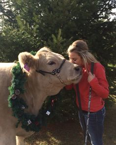 Christmas pictures with your steer Farm Senior Pictures, Farm Pictures, Senior Pics, Cow Quotes, Animal Quotes, Show Cows, Show Cattle, Showing Livestock, Cute Cows