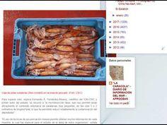 """23.02.18 - Blog """"La Caracola"""" - Noticias del Mar - Aprocean Investigadores del CSIC descubren la dieta de las potas en sus primeras fases de vida"""