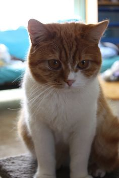 Geri by Alysia Walker Photography, via Flickr