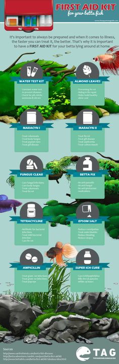 How to Spot and Treat Common Betta Fish Diseases   Earth's Friends
