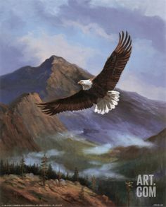 Eagle Gliding Art Print by M. Caroselli at Art.com