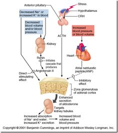 hypernatremia | Aldosterone hypersecretion: