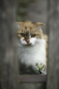 pretty cat with unusual markings