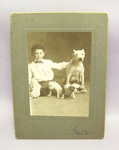 ANTIQUE VICTORIAN CABINET PHOTO PHOTOGRAPH of BOY, PIT BULL TERRIER w/ PUPPIES