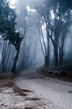 llbwwb:    Last Road by Jorge Maia.