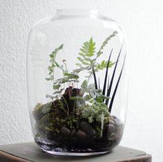 'Wild' Terrarium | Flickr - Photo Sharing!