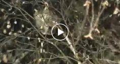 Como Um Soldado Russo Salva Um Gato Preso Numa Árvore http://www.desconcertante.com/como-um-soldado-russo-salva-um-gato-preso-numa-arvore/