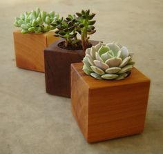 Three Succulent Garden Planters in Reclaimed by andrewsreclaimed
