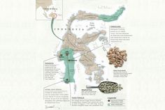 Sulawesi: Pembudidaya Arabika Mayoritas - Faber et Coffea Coffee Lab, Coffee Time, Coffee Chart, Death Before Decaf, Coffee Infographic, Coffee Roasting, Coffee Recipes, Caffeine, Affirmations