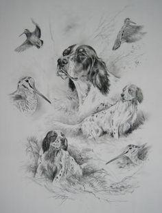 Hunting Art, Hunting Dogs, Irish Setter, English Setter, Hunting Drawings, Grouse Hunting, Hard Drawings, Group Of Dogs, Game Birds