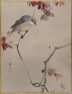 Bird on Branch Watching Spider  Watanabe Seitei  (Japanese, 1851–1918)    Period:      Meiji period (1868–1912)  Culture:      Japan  Medium:      Album leaf; ink and color on silk