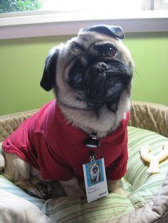 pug costume | - dog pug dogs pugs pets animals geek geeks nerd halloween costumes ...