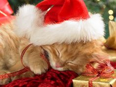 Christmas Kitten Sleeping Under Tree