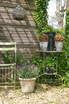 Garden glimpses...         Scruffy shed at the back of the garden?        Nothing that a few pots of lavenderishious loveliness and a coupl...