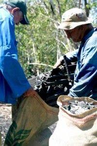 """El momento de la """"cosecha"""": ensacar el carbón producido."""