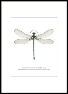 Juliste kauniilla sudenkorennolla.