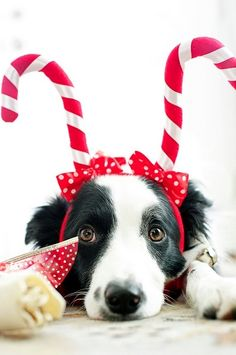 """Doggone cute! Merry Christmas from """"man's best friend."""""""
