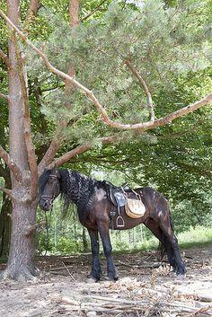 My Saddle Bag - Photoshoot