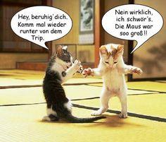Katzen__.jpg                                                                                                                                                      Mehr