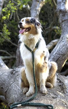 Rope Leash, Cute Funny Dogs, Cute Dogs And Puppies, Small Dogs, Animal Rescue, Best Dogs, Fur Babies, Dog Cat, Cute Animals