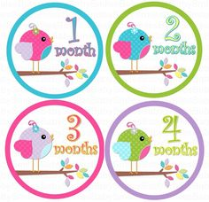 Monthly Onesie Stickers - NEW - Lil Sweet Baby Girl Birds - 13 Stickers (Just Born Included) - Baby Month Stickers - Baby Onesie Stickers. $9.99, via Etsy.